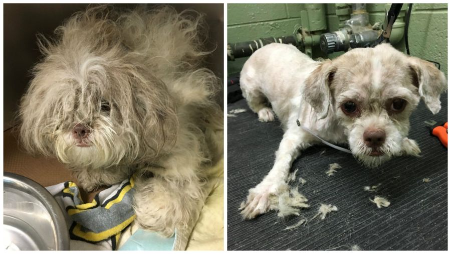Man Who Gives Shelter Dogs Free Haircuts (1)