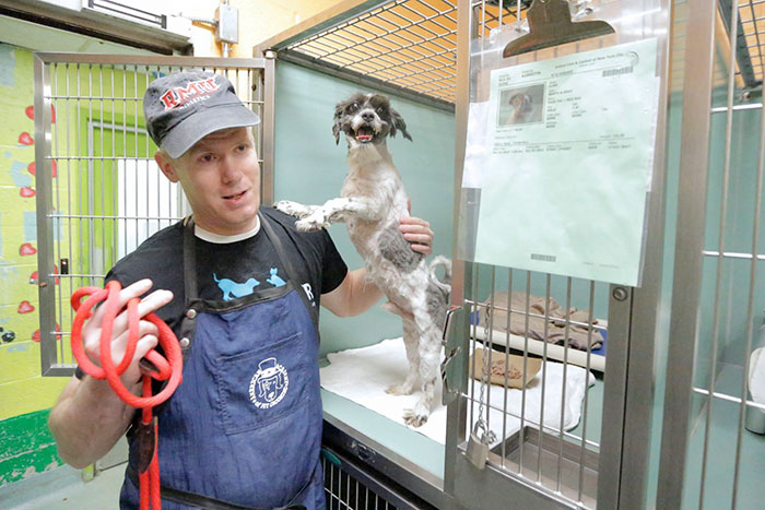 Man Who Gives Shelter Dogs Free Haircuts (5)