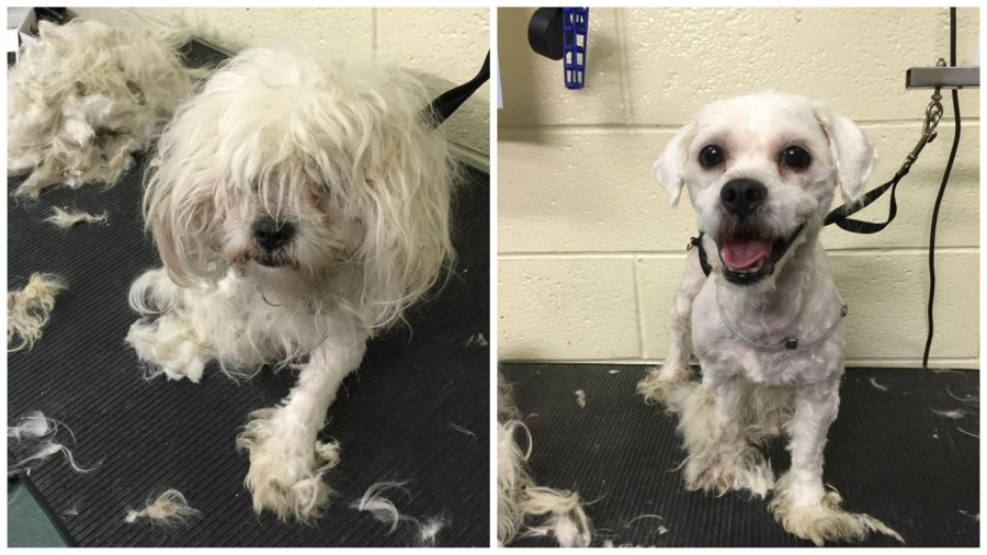 Man Who Gives Shelter Dogs Free Haircuts (9)