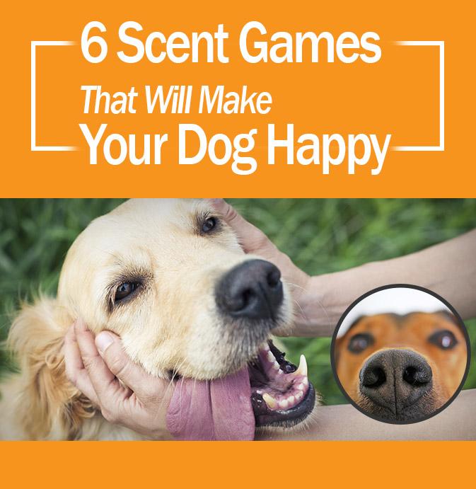 6-dog-games